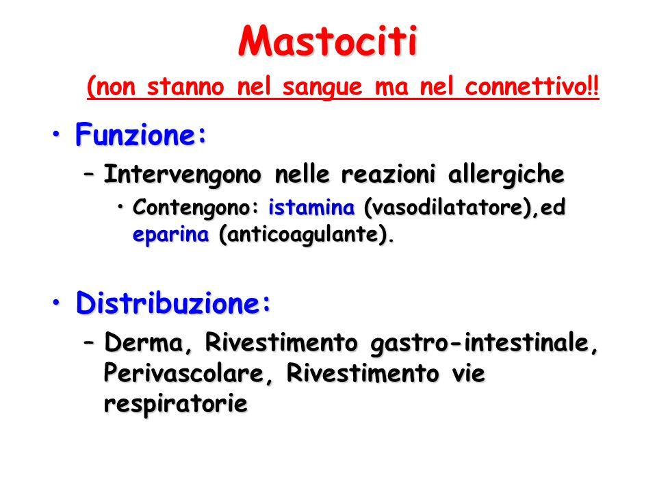 Mastociti Funzione: Distribuzione: