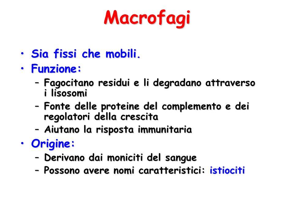 Macrofagi Sia fissi che mobili. Funzione: Origine: