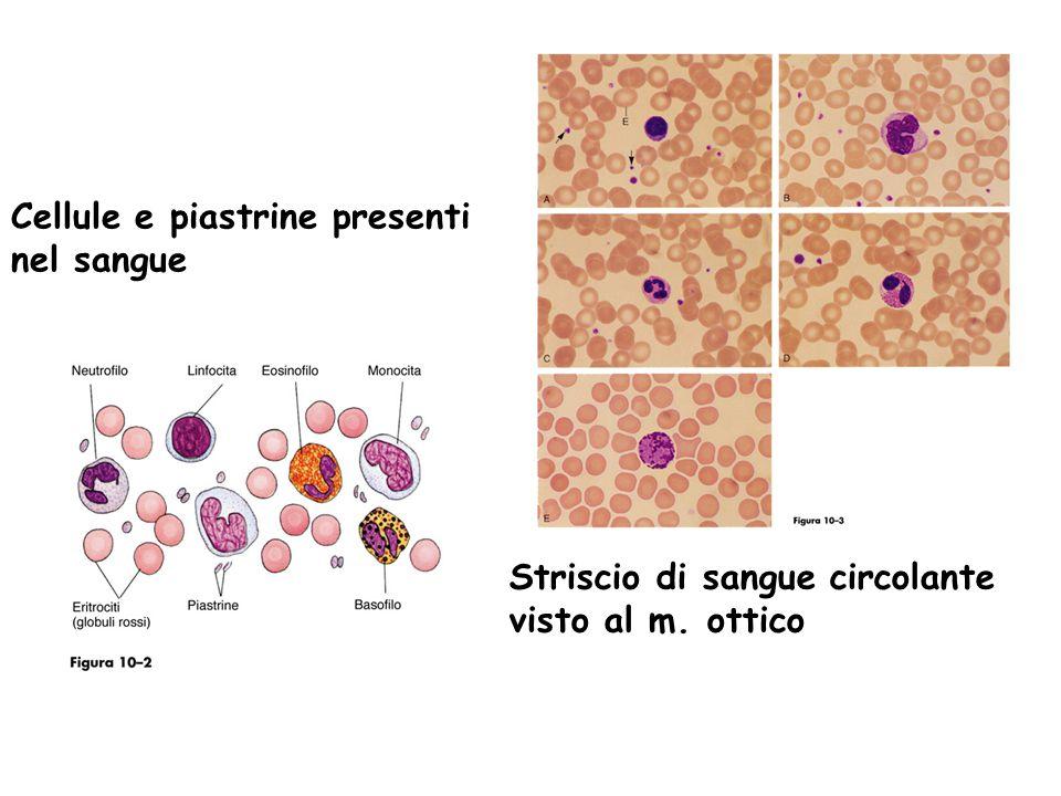 Cellule e piastrine presenti