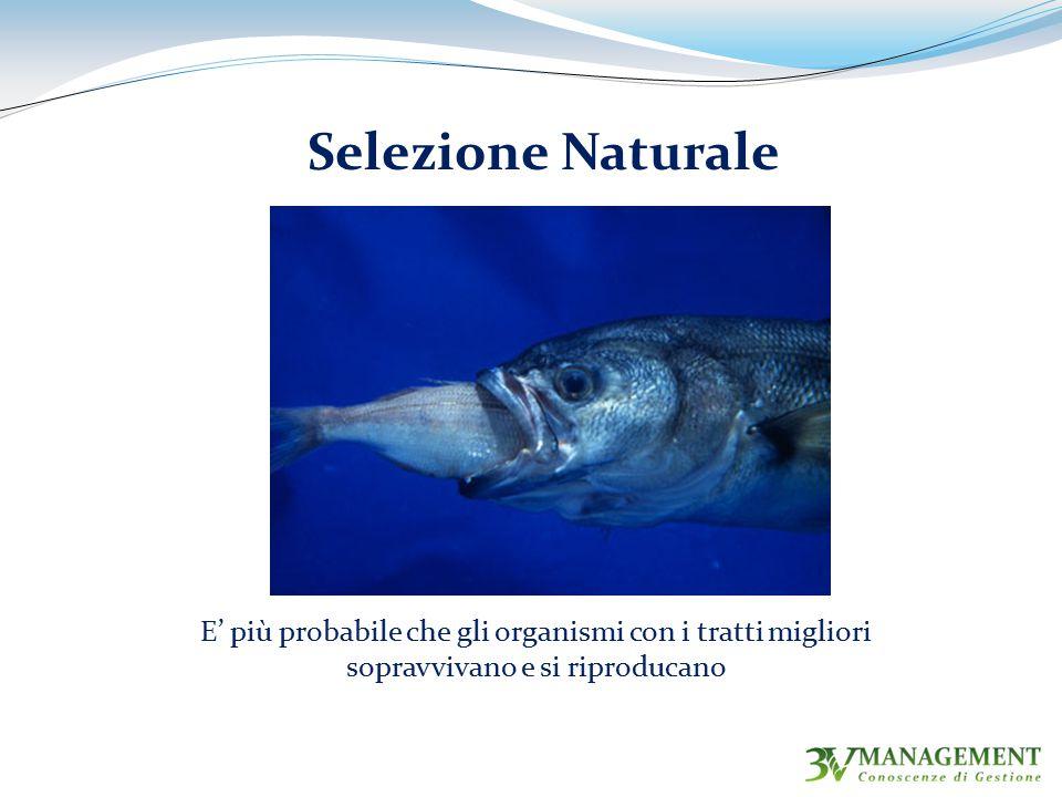 Selezione Naturale E' più probabile che gli organismi con i tratti migliori sopravvivano e si riproducano.