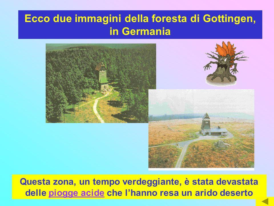 Ecco due immagini della foresta di Gottingen, in Germania
