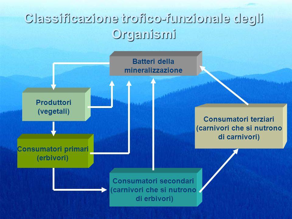 Classificazione trofico-funzionale degli Organismi