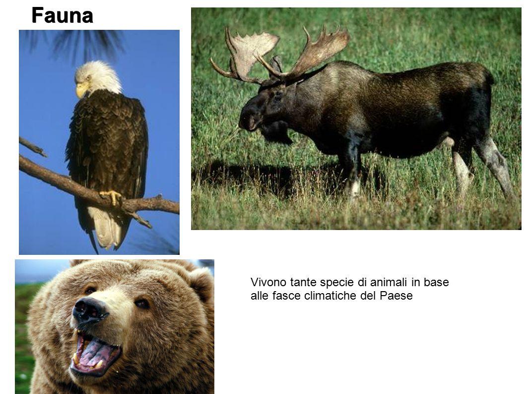 Fauna Vivono tante specie di animali in base