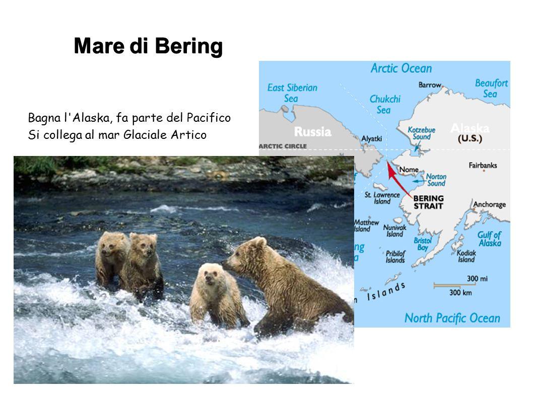 Mare di Bering Bagna l Alaska, fa parte del Pacifico