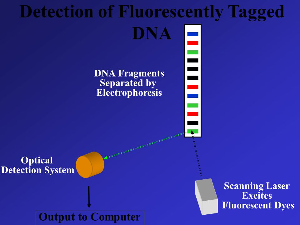 Detection of Fluorescently Tagged DNA