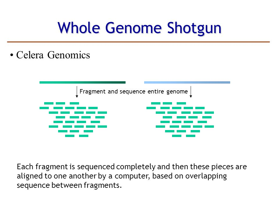 Whole Genome Shotgun Celera Genomics