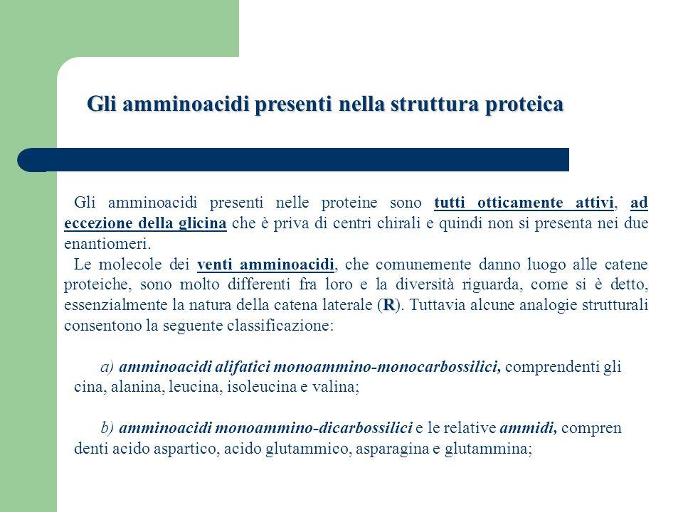 Gli amminoacidi presenti nella struttura proteica