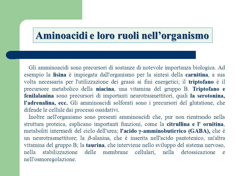 Aminoacidi e loro ruoli nell'organismo