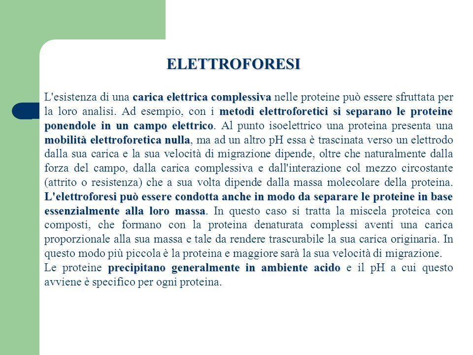 ELETTROFORESI