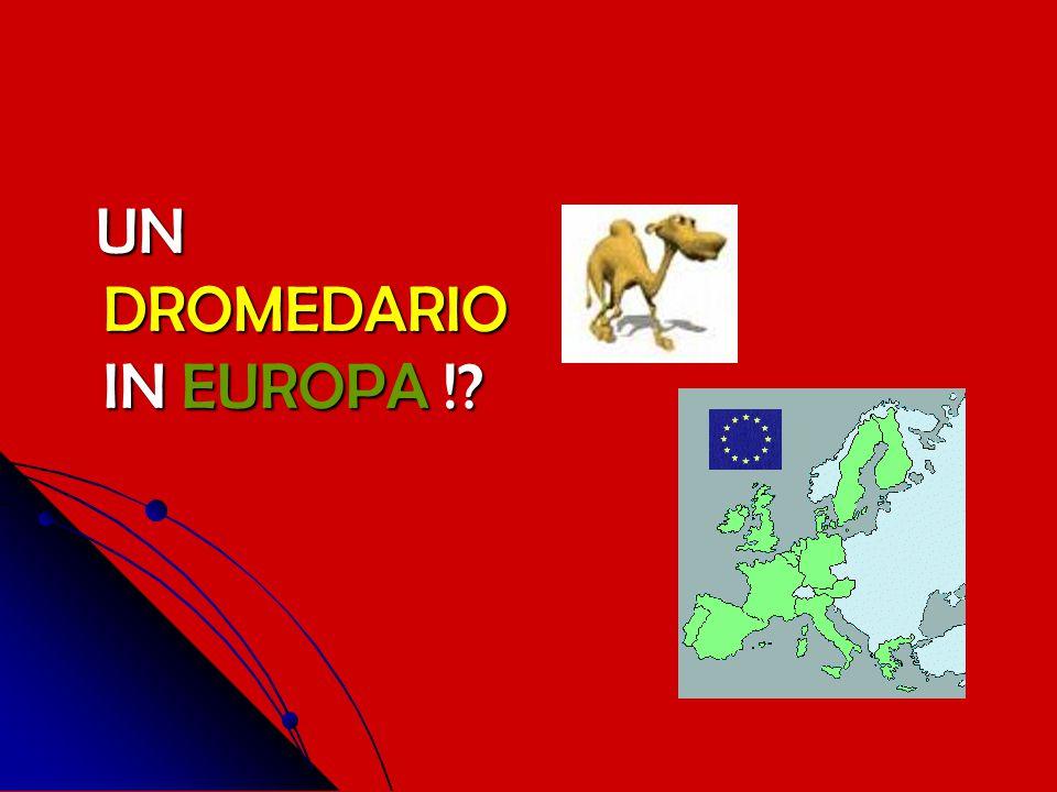 UN DROMEDARIO IN EUROPA !
