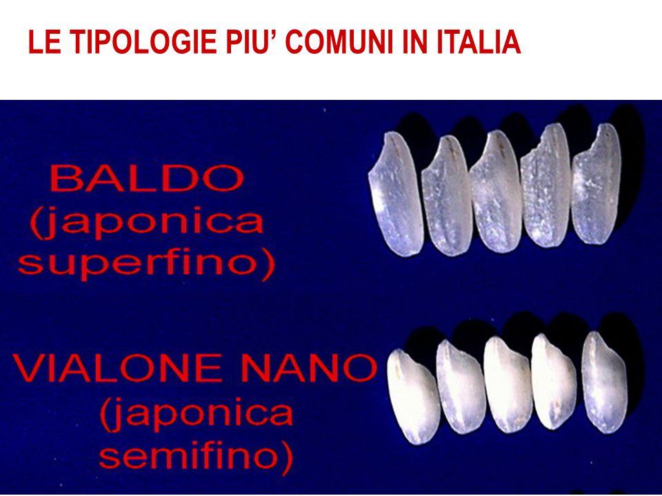 LE TIPOLOGIE PIU' COMUNI IN ITALIA