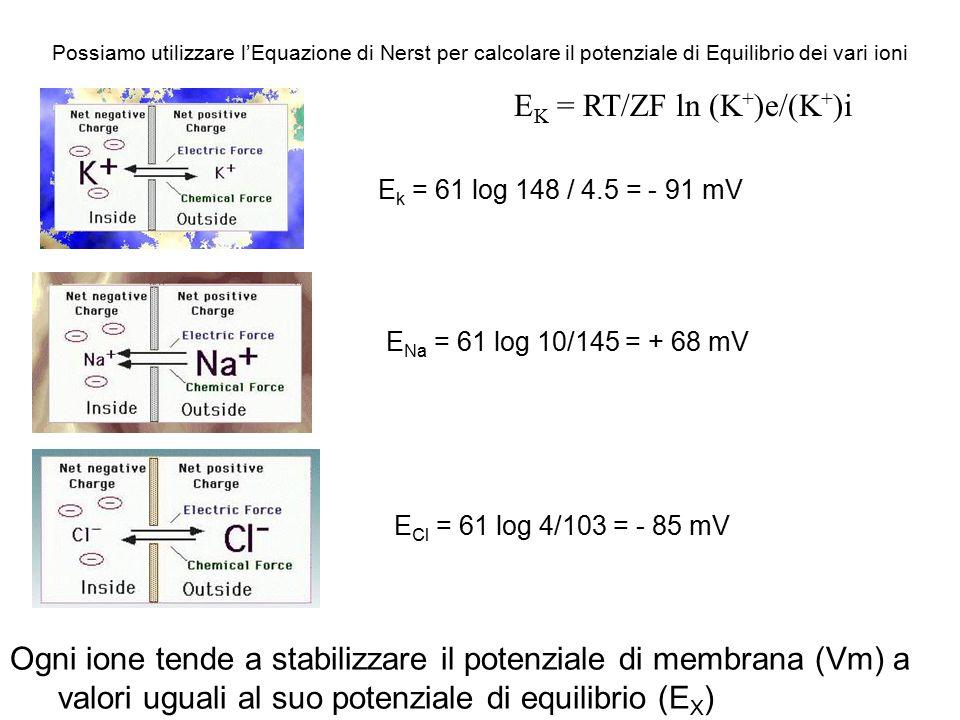 EK = RT/ZF ln (K+)e/(K+)i
