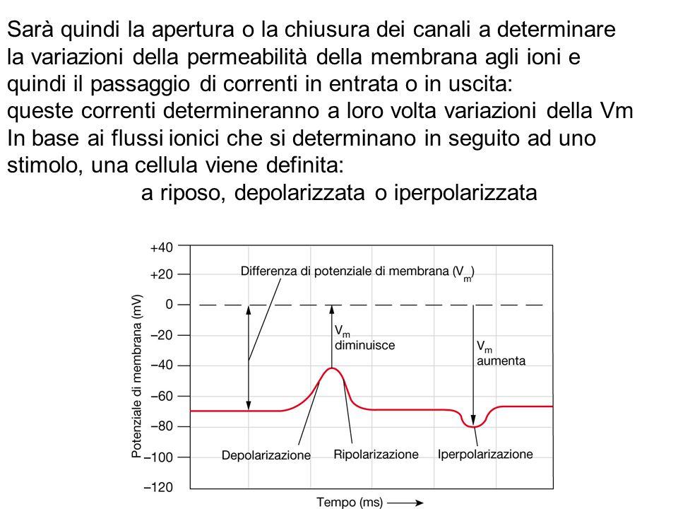 a riposo, depolarizzata o iperpolarizzata