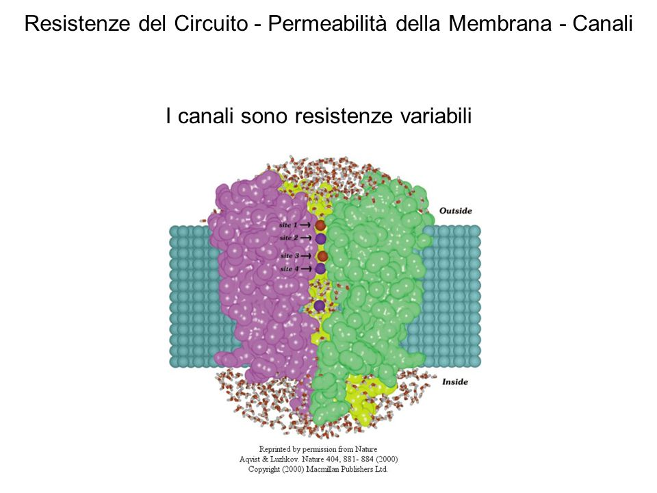 Resistenze del Circuito - Permeabilità della Membrana - Canali