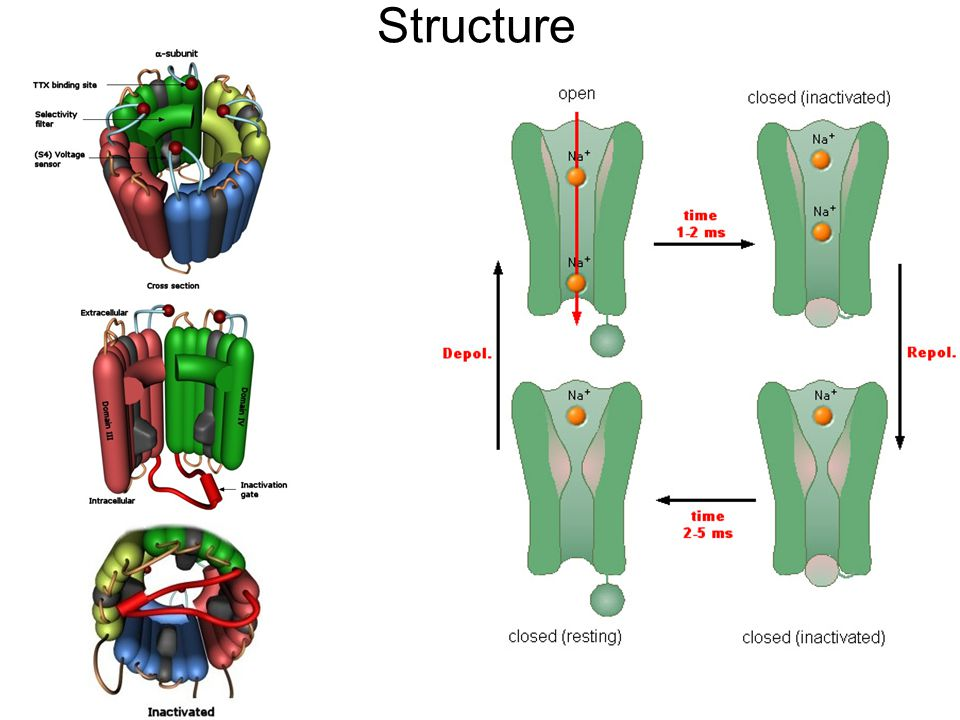 Sodium Channel StructureChannel Structure