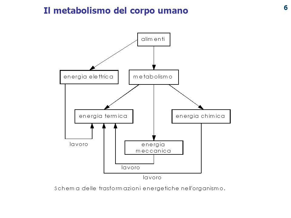 Il metabolismo del corpo umano