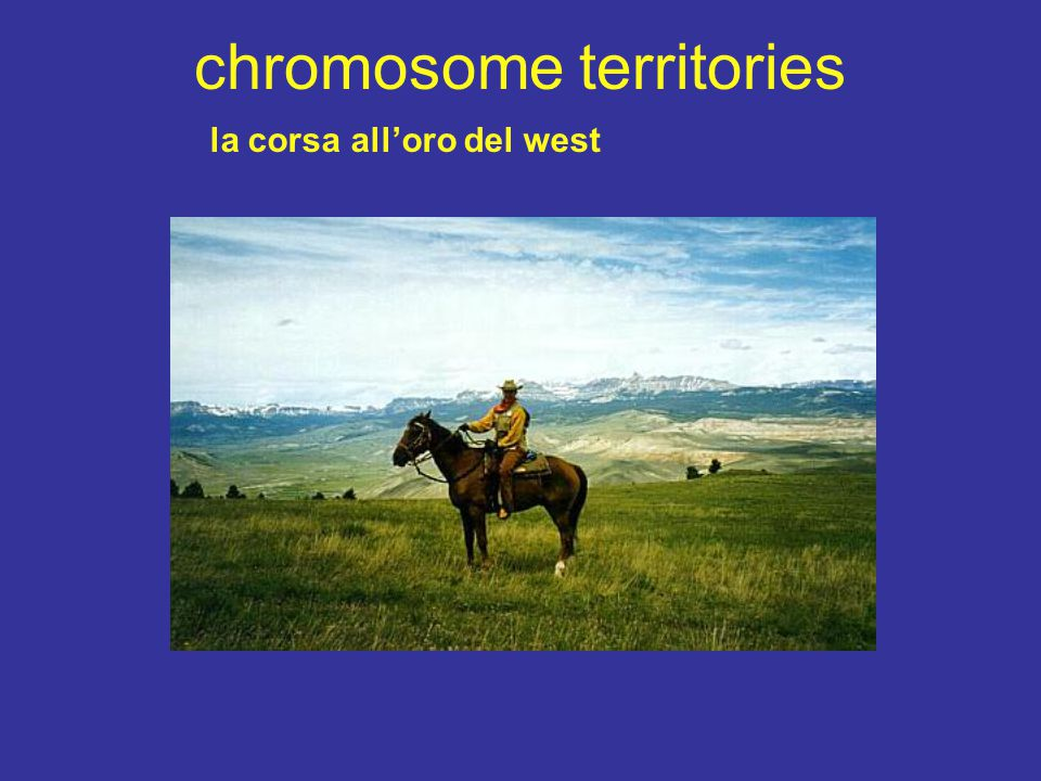 chromosome territories