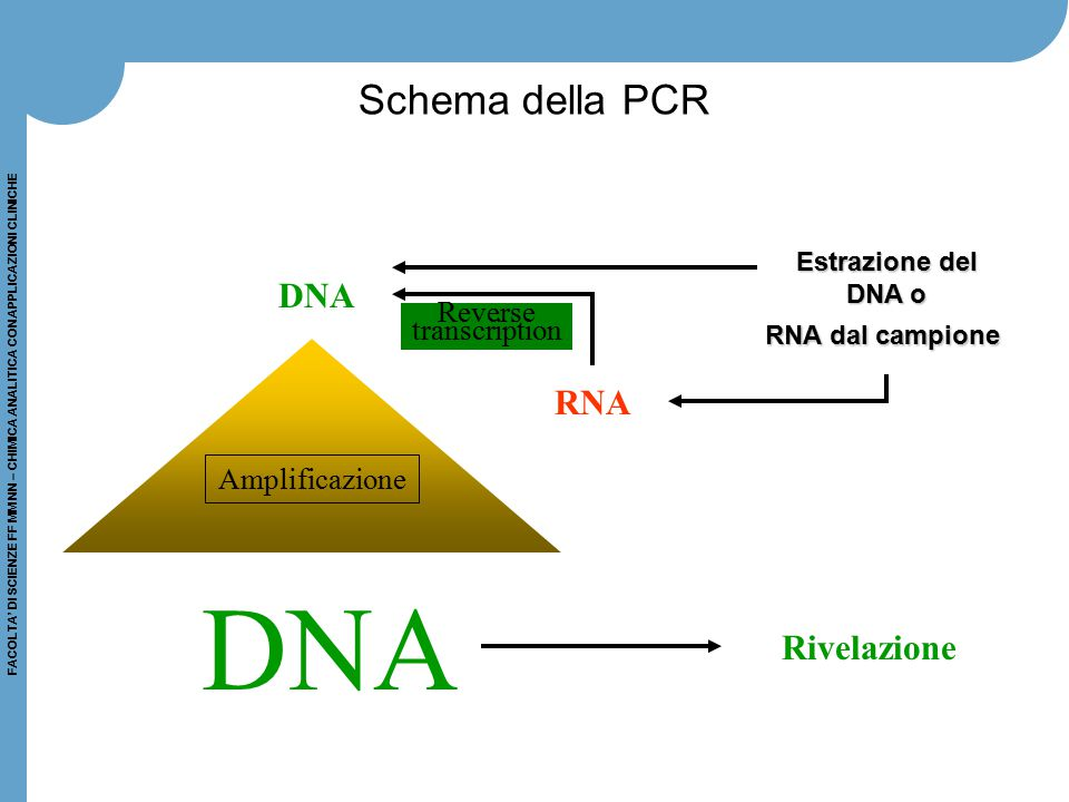 DNA Schema della PCR DNA RNA Rivelazione Reverse transcription