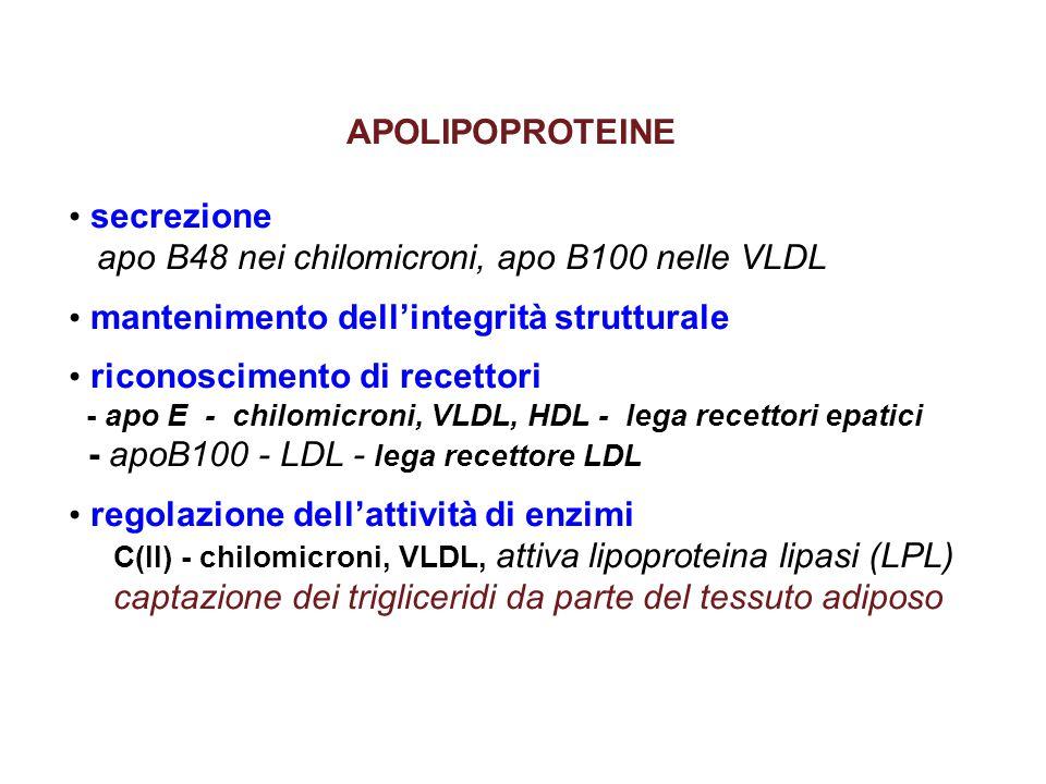 apo B48 nei chilomicroni, apo B100 nelle VLDL