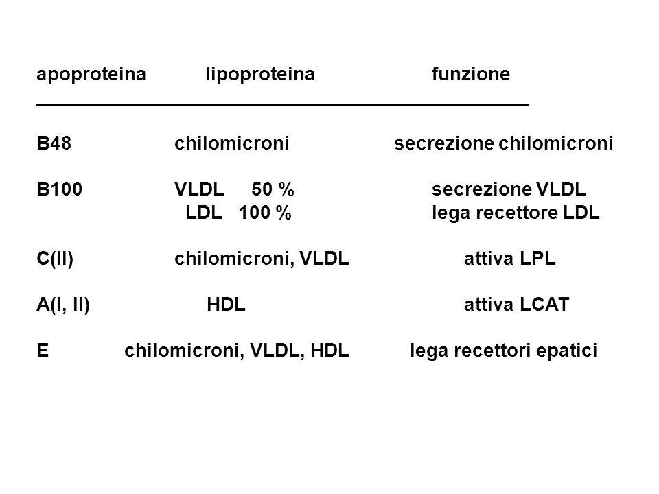 apoproteina lipoproteina funzione