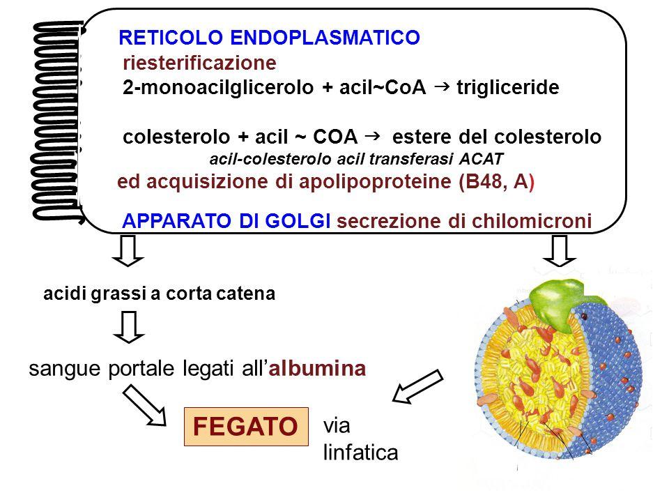 acil-colesterolo acil transferasi ACAT