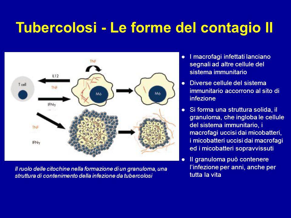 Tubercolosi - Le forme del contagio II