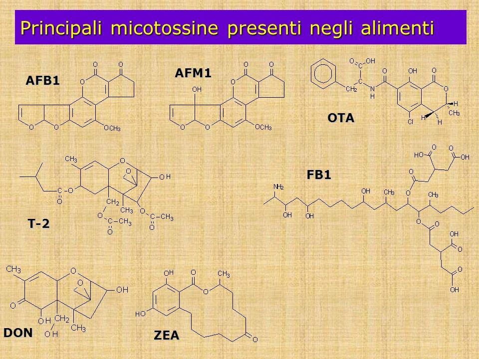 Principali micotossine presenti negli alimenti