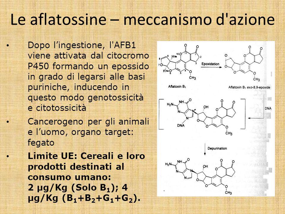 Le aflatossine – meccanismo d azione