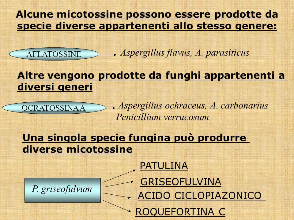 Aspergillus flavus, A. parasiticus