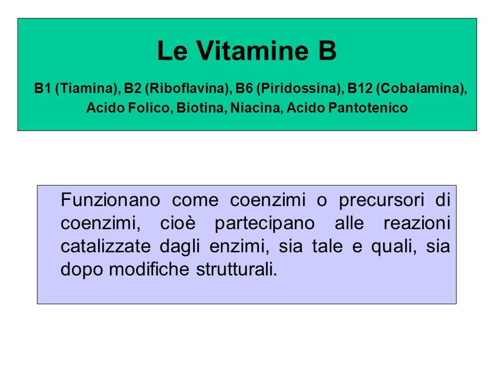 Le Vitamine B B1 (Tiamina), B2 (Riboflavina), B6 (Piridossina), B12 (Cobalamina), Acido Folico, Biotina, Niacina, Acido Pantotenico