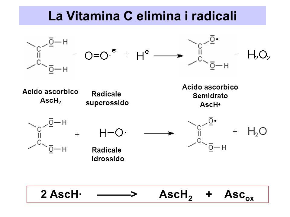 La Vitamina C elimina i radicali 2 AscH· ———> AscH2 + Ascox