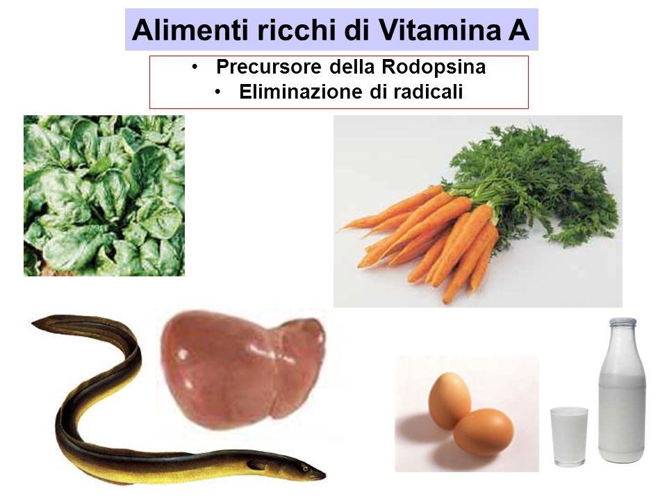 Precursore della Rodopsina Eliminazione di radicali