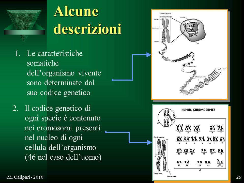 Alcune descrizioni Le caratteristiche somatiche dell'organismo vivente sono determinate dal suo codice genetico.