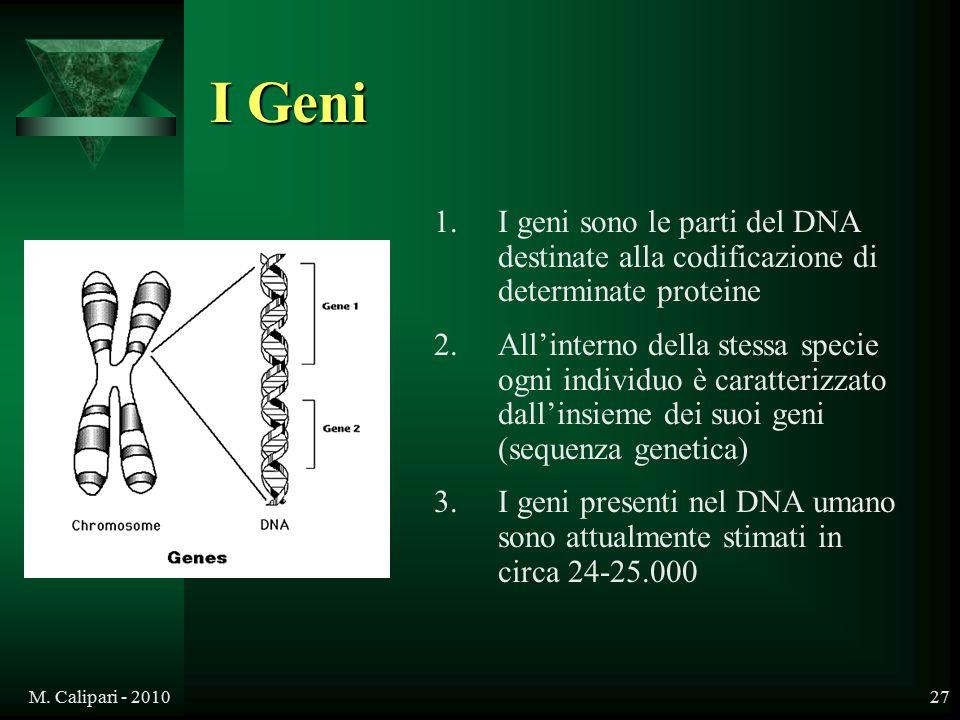 I Geni I geni sono le parti del DNA destinate alla codificazione di determinate proteine.