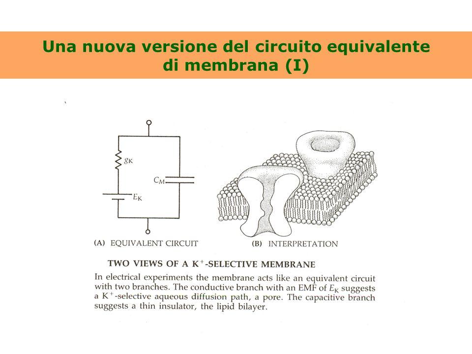 Una nuova versione del circuito equivalente di membrana (I)