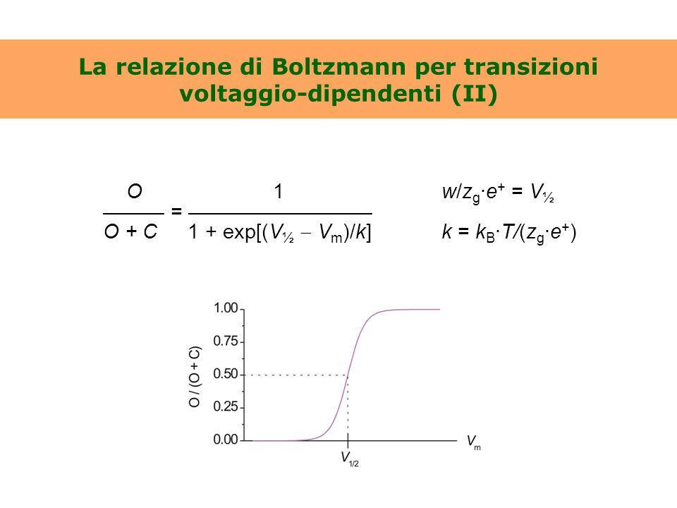 La relazione di Boltzmann per transizioni voltaggio-dipendenti (II)