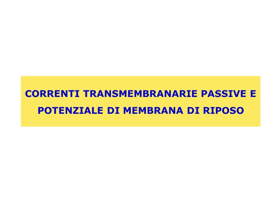 CORRENTI TRANSMEMBRANARIE PASSIVE E POTENZIALE DI MEMBRANA DI RIPOSO