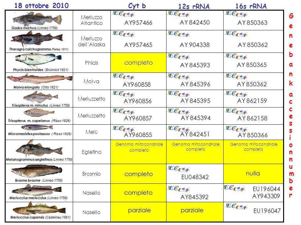 Genoma mitocondriale completo