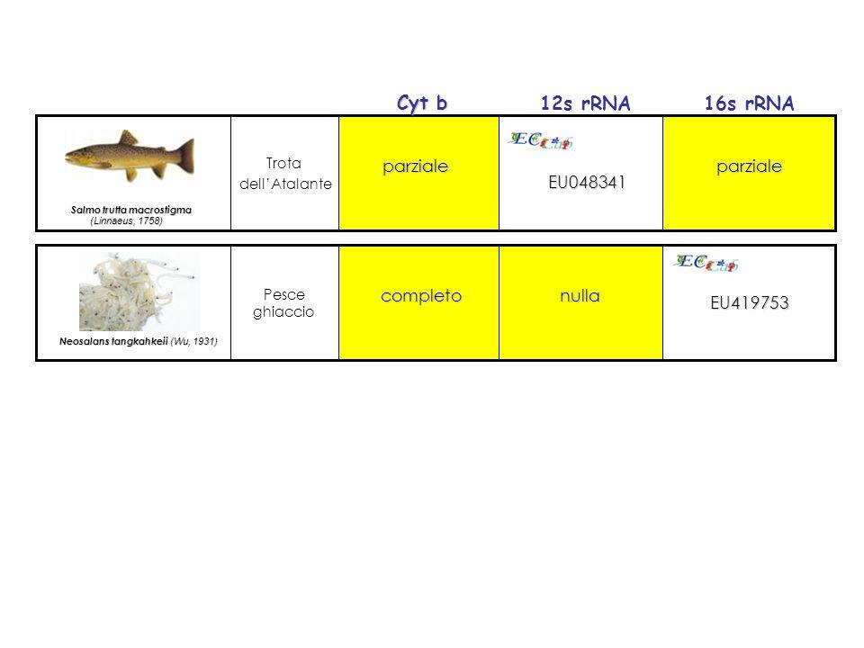 Cyt b 12s rRNA 16s rRNA EU048341 parziale EU419753 completo nulla