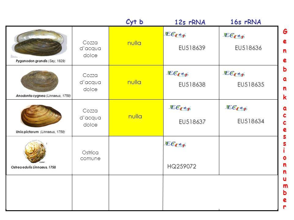 Cyt b 12s rRNA 16s rRNA G e n b a k access ion number nulla EU518639