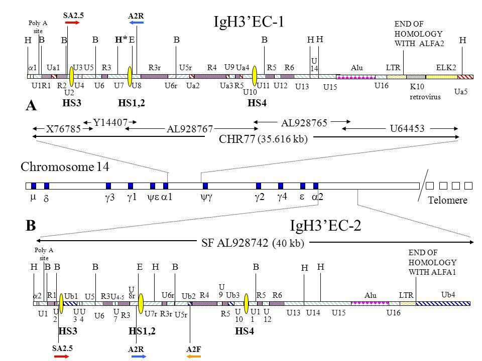 IgH3'EC-1 A IgH3'EC-2 Chromosome 14 CHR77 SF AL928742 (40 kb) HS3