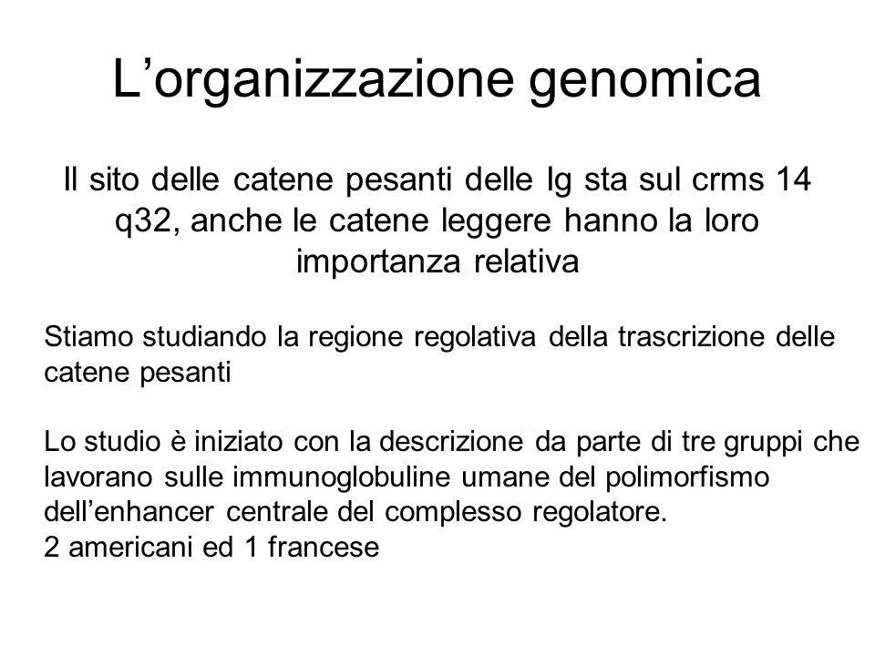 L'organizzazione genomica
