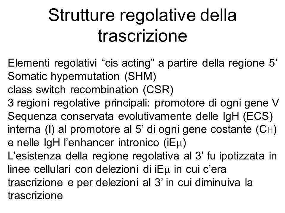 Strutture regolative della trascrizione