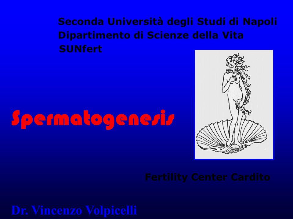 Spermatogenesis Dr. Vincenzo Volpicelli
