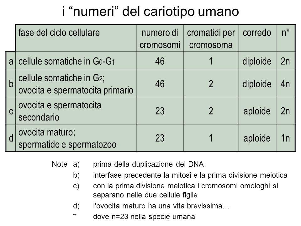 i numeri del cariotipo umano