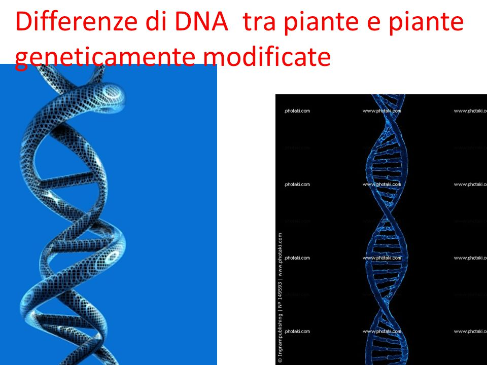 Differenze di DNA tra piante e piante geneticamente modificate