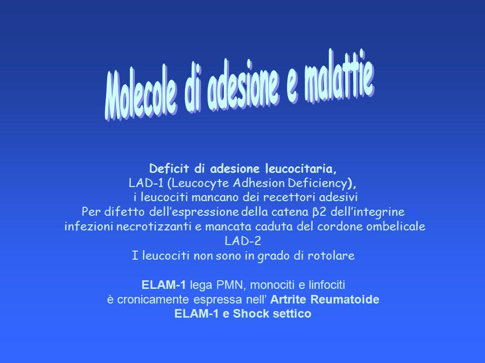 Molecole di adesione e malattie Deficit di adesione leucocitaria,