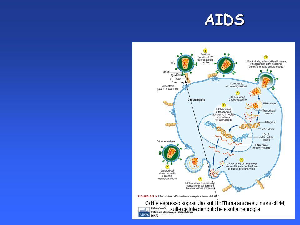 AIDS Cd4 è espresso soprattutto sui LinfThma anche sui monociti/M,