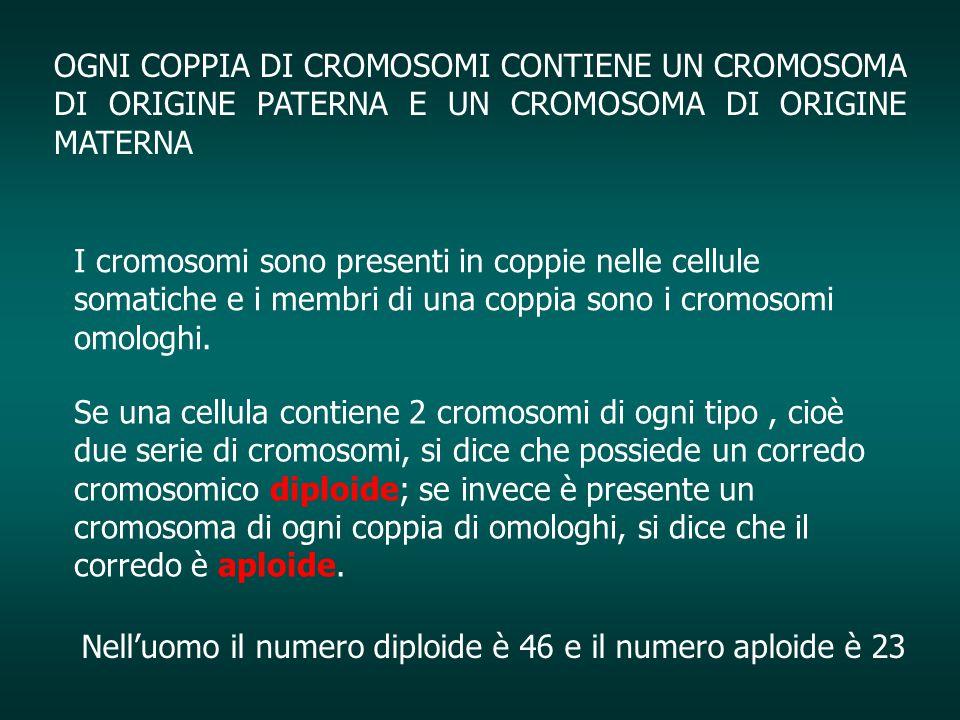 OGNI COPPIA DI CROMOSOMI CONTIENE UN CROMOSOMA DI ORIGINE PATERNA E UN CROMOSOMA DI ORIGINE MATERNA