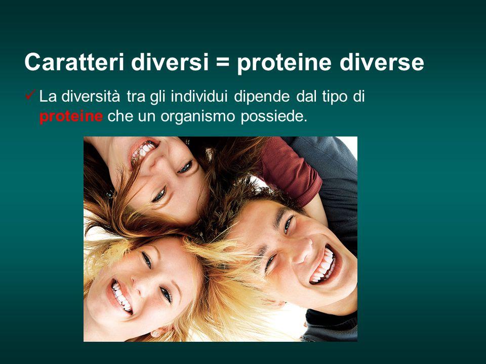 Caratteri diversi = proteine diverse